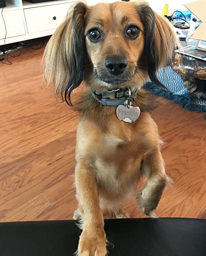 O cachorro Franklin.