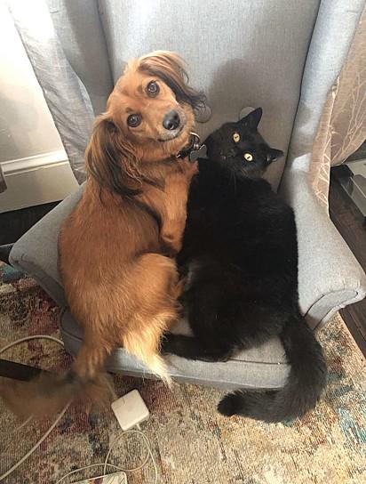 Franklin e o gatinho Bagheera.