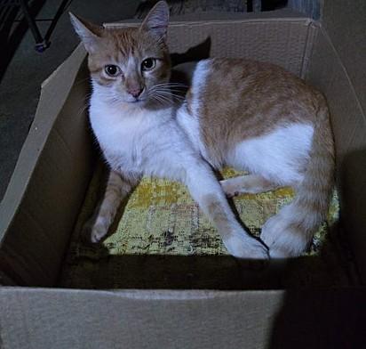 O gatinho Chany.