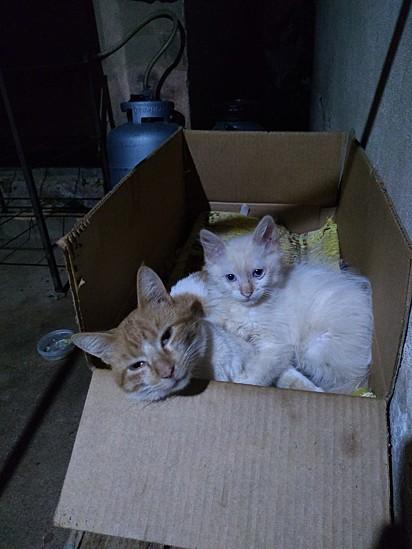 Chany com a gatinha Lulu que encontrou na rua.