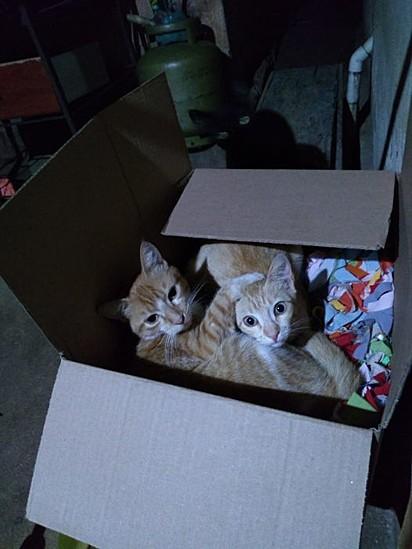 Chany parece ter encontrado o seu irmão gêmeo.