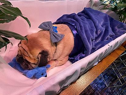 Dexter adorava a cor azul.