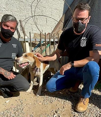 A cachorrinha foi resgatada e encaminhada para um Clínica Veterinária.