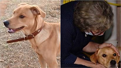 Uruguiana toma diversas atitudes para reencontrar seu cachorro.