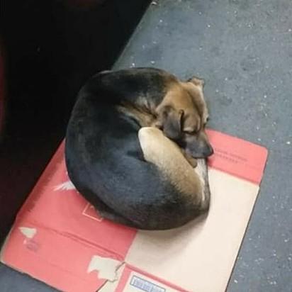 A mulher encontrou o cachorrinho todo enroladinho, tremendo de frio.