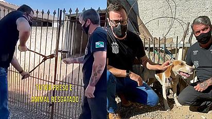 Equipe se mobiliza para resgatar cadela sob maus-tratos no Paraná.