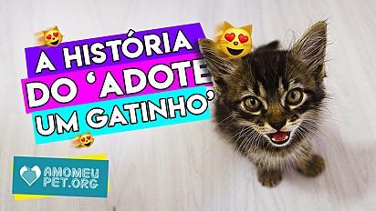 Conheça a história do projeto Adote um Gatinho - Passo Fundo.