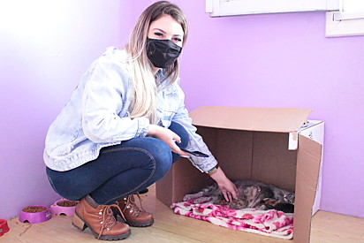 A redatora Ana Caroline Haubert conhecendo uma família de gatinhos resgatada pelo projeto.