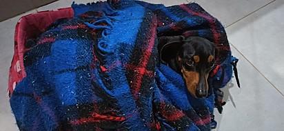 Fofuraaa. A minha ama de paixão a caminha e cobertor dela!
