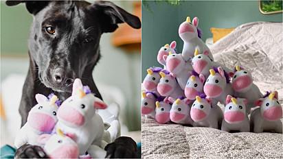 Cachorra tem verdadeira fascinação por unicórnio e empresa que fabrica lhe envia uma porção deles.