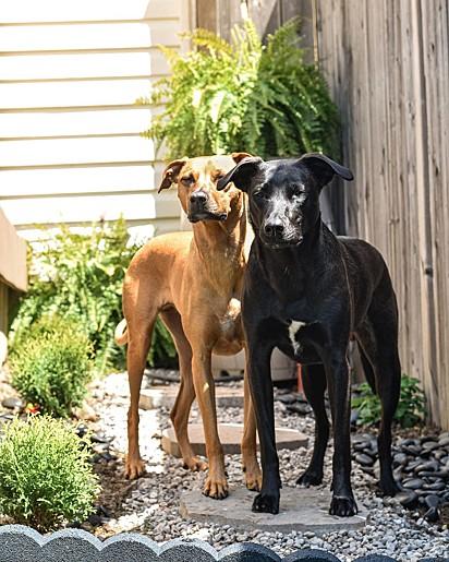Rosie (preta) e Bindi (caramelo).