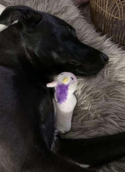 Rosie com o seu brinquedo favorito.