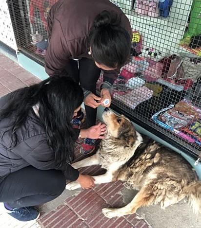 Bear foi resgatado das ruas por voluntários da Brigada de Solidariedade Loreto.
