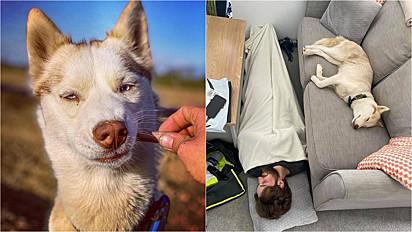 Husky siberiano muito paparicada pelos donos, deita no sofá enquanto dono deita no chão.
