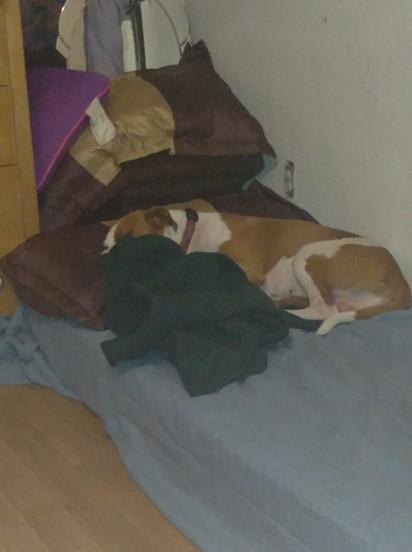 Ele tem sua própria cama de solteiro.