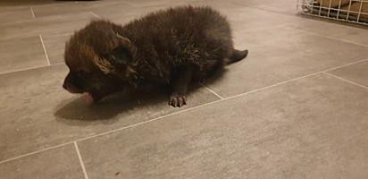 O filhote foi encontrado por um trabalhador da construção civil.