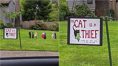 Gata furta pertences dos seus vizinhos e dono estende varal no jardim para pendura-los para que os respectivos donos possam recuperá-los.
