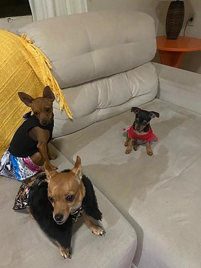 O trio Bolinha, Maju e Brisa.