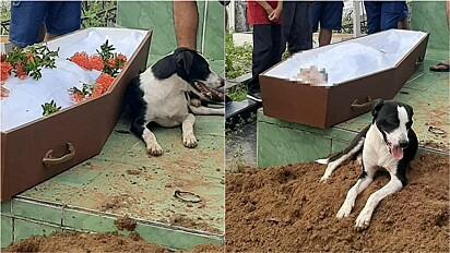 Cachorro permanece ao lado do caixão de dono em Parintins, Amazonas.