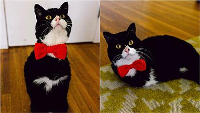 Gato sem patas dianteiras se torna exemplo de superação.