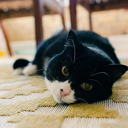 O gatinho Rexie Roo.