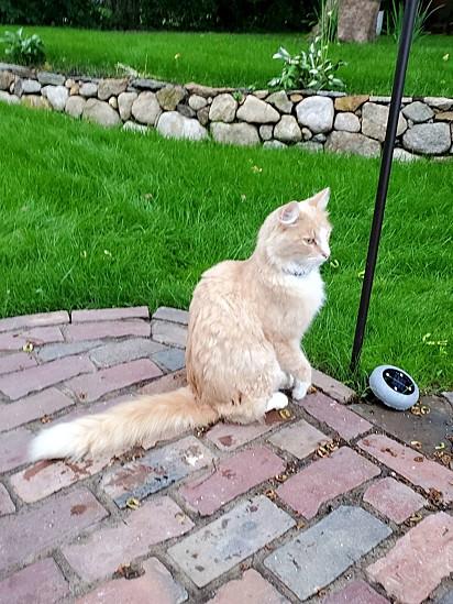 O gato Bolo de Cenoura.