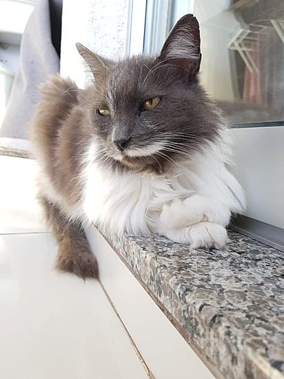Mima, a gatinha de 18 anos de Elisandra Lovison, adotada por um casal de amigos.