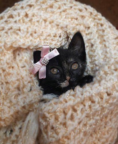 Um filhote de gatinho resgatado e cuidado pelo projeto.