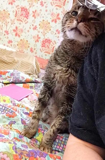 O gatinho adora dar cabeçadas em seus salvadores como forma de agradecimento.