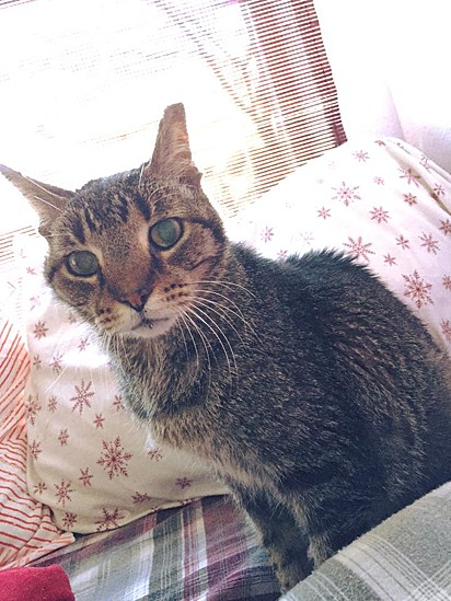 Orion foi resgatado pelo abrigo Kitty Adventure Rescue League.