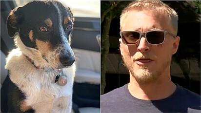 Tutor busca por paradeiro do seu cão roubado junto com carro em Jackson, Mississippi (EUA).