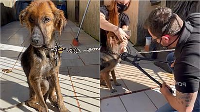 Delegado Matheu Laiola resgata cachorrinha maltratada no Paraná.