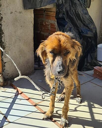 A cachorrinha era mantida presa em uma corrente com chave.