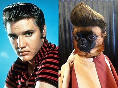 Não dá pra negar a semelhança. Seriam dois Elvis?