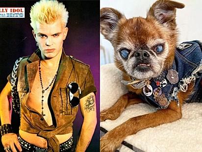 E esse cachorrinho que tem mesmo estilo do roqueiro Billy Idol do Rebel Yell.