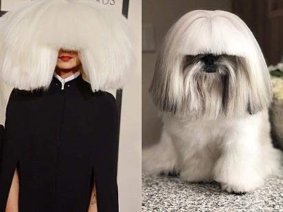 A peruca da dançarina americana Maddie Ziegler talvez tenha sido inspirada neste cachorro.