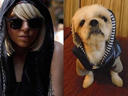 Esse cachorrinho se inspirou no look de Lady Gaga.