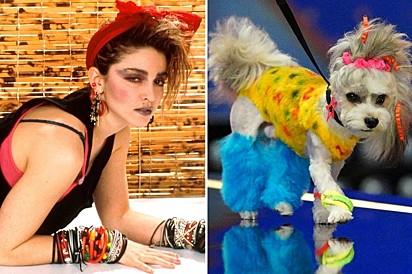 Um cachorrinho fantasiado de Madonna. É muita semelhança.