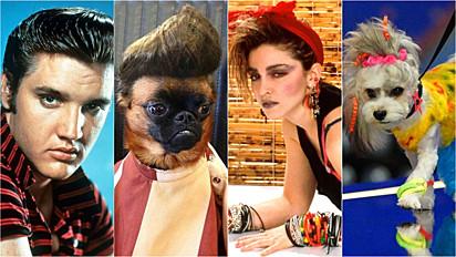 Onze fotos de cães parecidos com famosos.