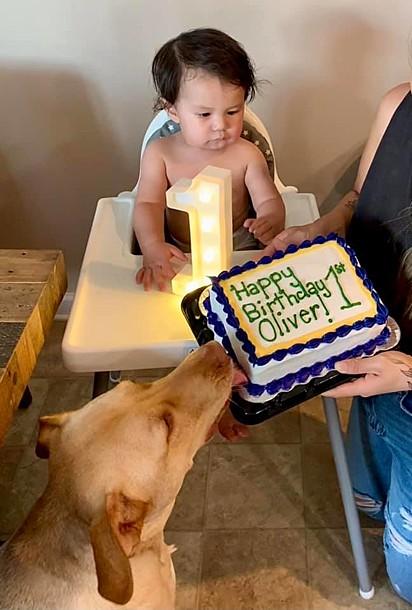O cão Roux dando uma provadinha no bolo.
