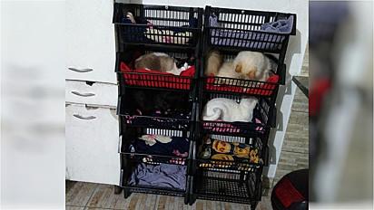 Mulher inspira internautas a criarem o CDHU dos gatos.