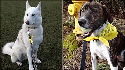 Projeto visa ensinar as pessoas a entenderem e a lidarem o melhor possível com seus cães.