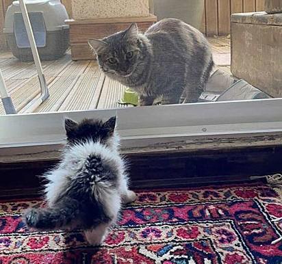Titak não perdeu tempo em conhecer a nova irmãzinha.