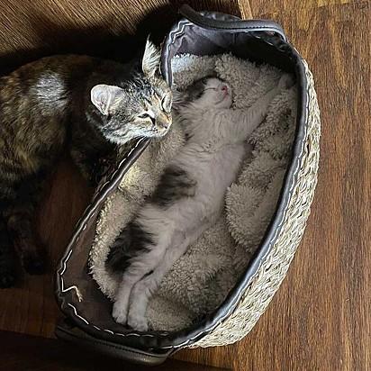 Titak encantado com a felina em sua cama.