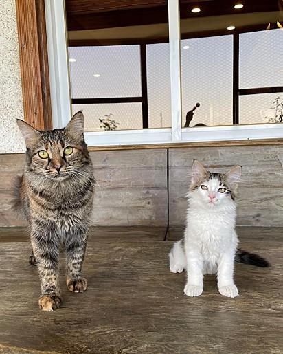Titak e Bolur se tornaram grande amigos.