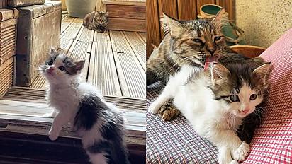 Gato fica encantado com a nova integrante da família.