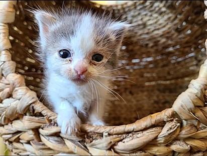 A gatinha Addie quando foi encontrada estava com a saúde debilitada.