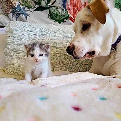 A cachorrinha Ava e a gatinha Addie.