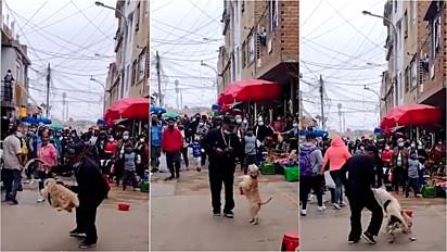 Homem defende seu cachorro de ataque de outro em apresentação na rua.