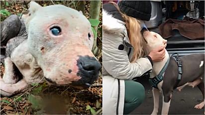 Pit bull cega é resgatada e ganha nova vida.